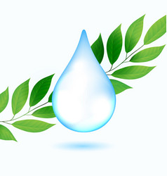 drop water with green leaves vector image