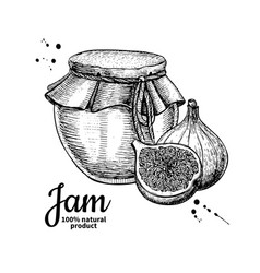 Fig jam glass jar drawing fruit jelly an vector