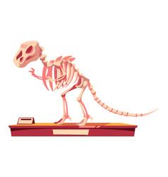 Fragment dinosaur skeleton fossilized bones vector