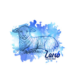 hand drawn sketch lamb natural lamb meat vector image