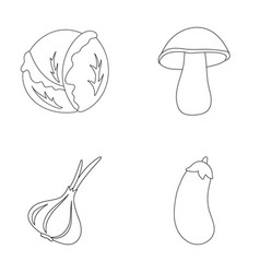 Cabbage white mushroom forest garlic useful vector
