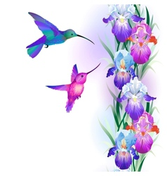 Seamless pattern with Iris and hummingbirds vector image vector image