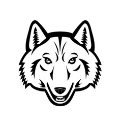 Head artic wolf front view mascot black vector