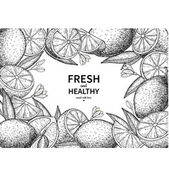 lemon label drawing citrus fruit engraved vector image