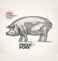 pig in graphical style vector image