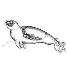 Seal vintage vector