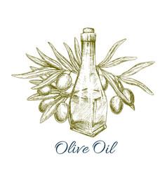oil bottle with olive fruits sketch poster vector image