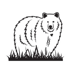 Bear on the grass vector