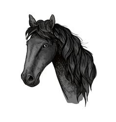 Horse head sketch of black arabian stallion vector image
