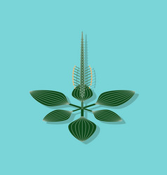 Paper sticker on stylish background plant plantago vector