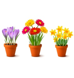 vases with flowers vector image