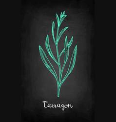 Chalk sketch of tarragon vector