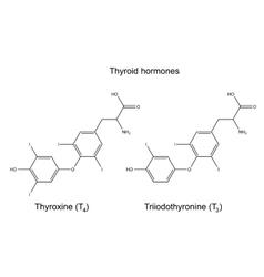 Chemical formulas of thyroid hormones vector
