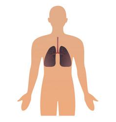 human organs human anatomical vector image