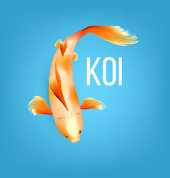 oriental white koi fish with orange spots vector image