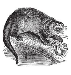 otter vintage vector image