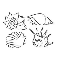 Sketches sea cockleshells vector
