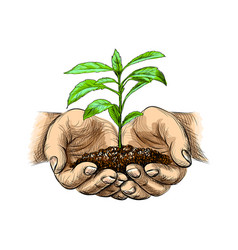 young plant with ground in hands palms holding a vector image