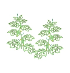 Cucumber plants with leaves flowers and cucumbers vector image vector image