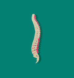 human vertebral column paper sticker on stylish vector image