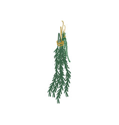 bunch of rosemary with rope cartoon vector image
