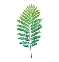 fern leaf vector image