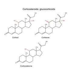 Corticosteroids - glucocorticoids hormones vector image vector image