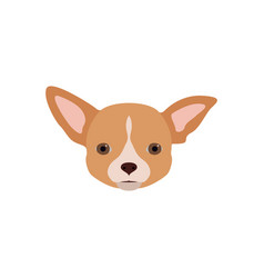 chihuahua dog in flat style vector image vector image