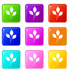 cherry leaves icons 9 set vector image