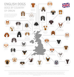 Dogs country origin english dog breeds vector