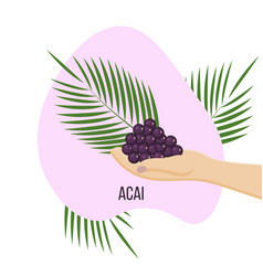 hand with superfood acai berry branches and vector image