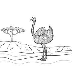 Ostrich coloring book for adults vector image