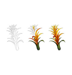 cartoon halftone with tropical lily flower vector image