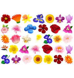 set different flower vector image