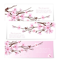 Three banners with Sakura flowers vector image