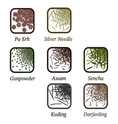 Varieties of tea vector