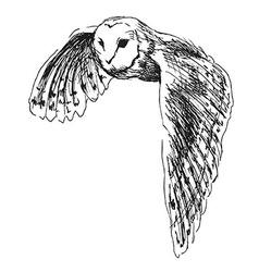 Hand sketch flying owl vector image