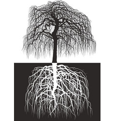 wisteria tree along with roots vector image vector image