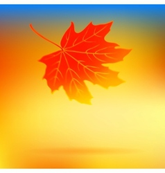 Autumn card with falling leaf and soft lights vector image