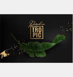 banner of banana leaf on black vector image