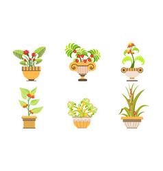 blooming potted plants set beautiful plants and vector image