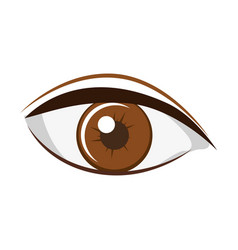 Colorful silhouette light brown eye with eyebrow vector