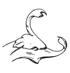 Dolphin head is a natural design vintage engraving vector