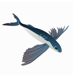 Flying fish in cartoon style on white background vector image