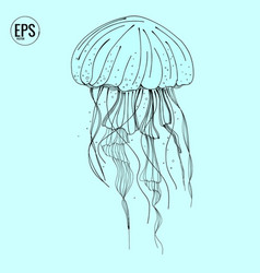 hand drawn jellyfish sea marine animal vector image