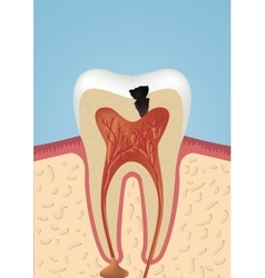 Tooth sheme icon vector