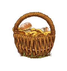 Wicker basket full of mushrooms orange cap boletus vector
