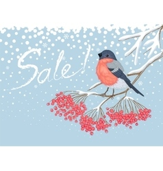 Winter sale card with bullfinch on the rowan vector