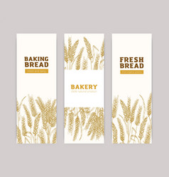 bundle vertical banner templates with wheat vector image
