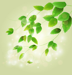 spring branch with fresh green leaves vector image